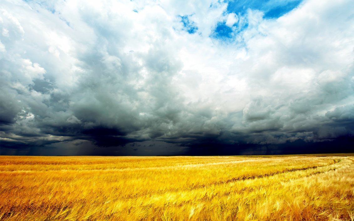 Download Wallpaper Wheat field in a summer day - the storm is coming