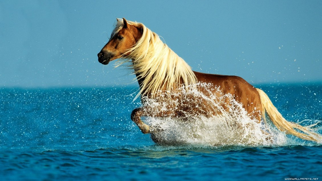 Download Wallpaper Wonderful horse run in the ocean water - HD wallpaper