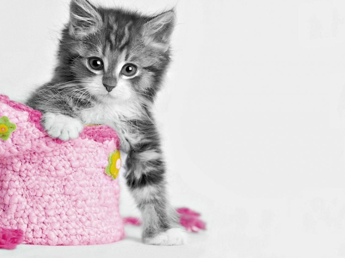 Sweet Little Cat And A Pink Bag Hd Wallpaper