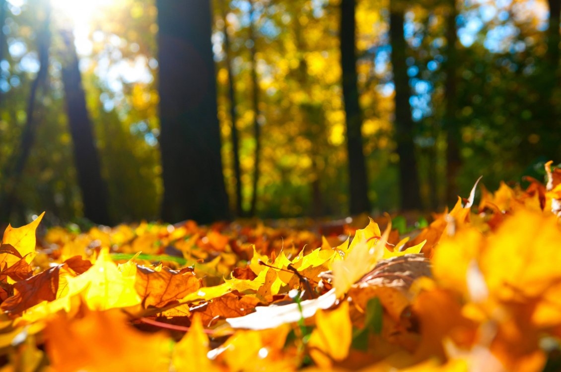 Download Wallpaper Wallpaper in the forest - Autumn leaves carpet