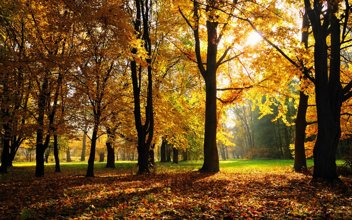 Download Wallpaper Sunny Autumn day in the park - wonderful moments