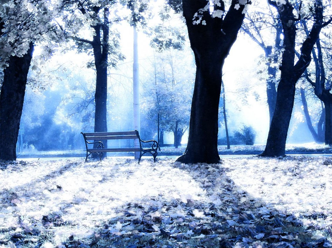 Download Wallpaper Sunny winter day in the park - White nature wallpaper