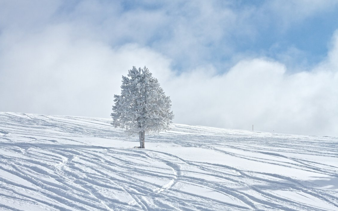 Download Wallpaper One white tree in the middle of the snow - HD wallpaper