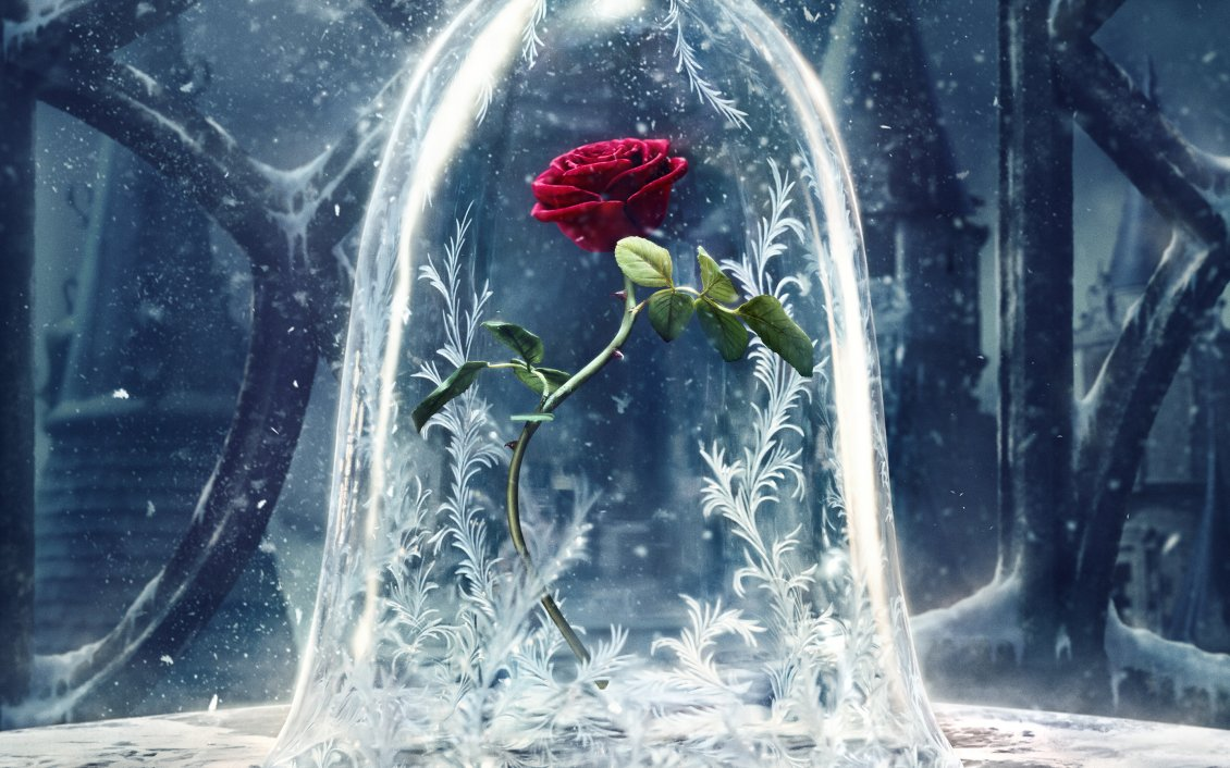Download Wallpaper Wonderful red rose protected from the cold winter season