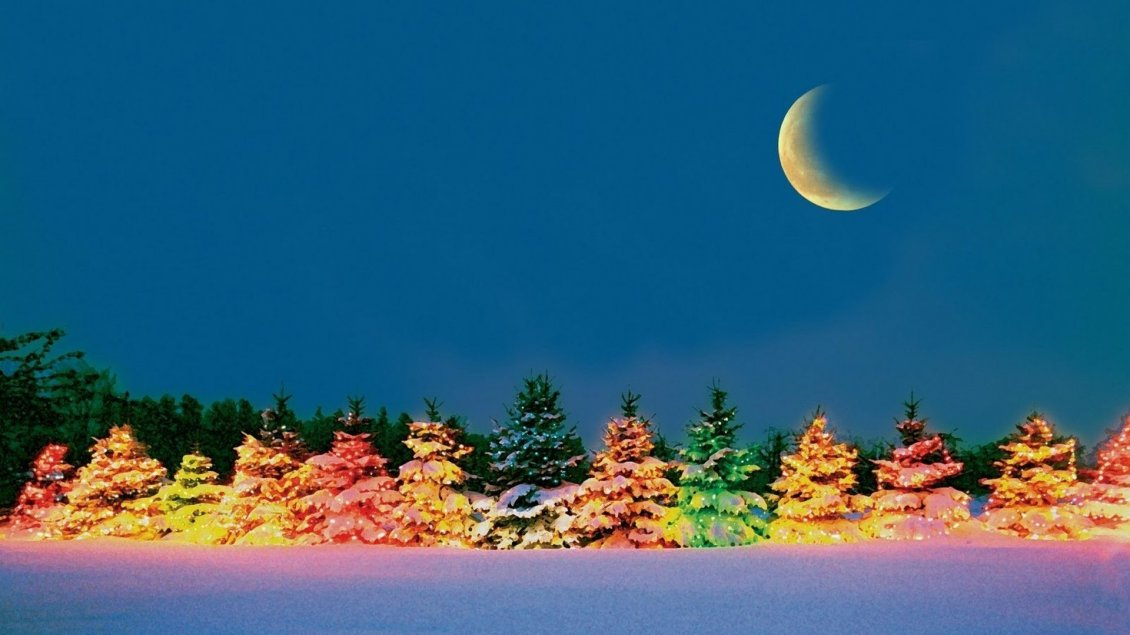 Download Wallpaper Colorful tree in the cold winter night - HD wallpaper