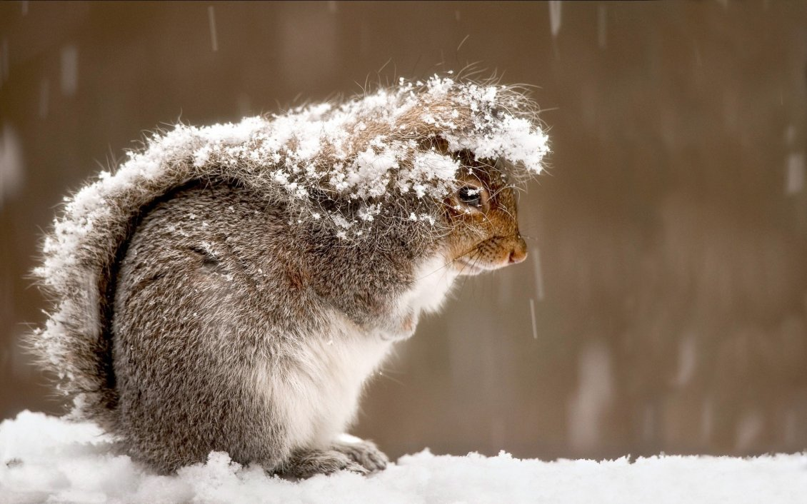 Download Wallpaper Frozen squirrel in the cold winter day