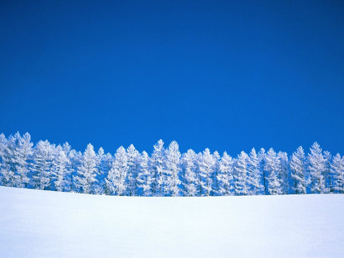 Download Wallpaper White forest and a wonderful blue sky