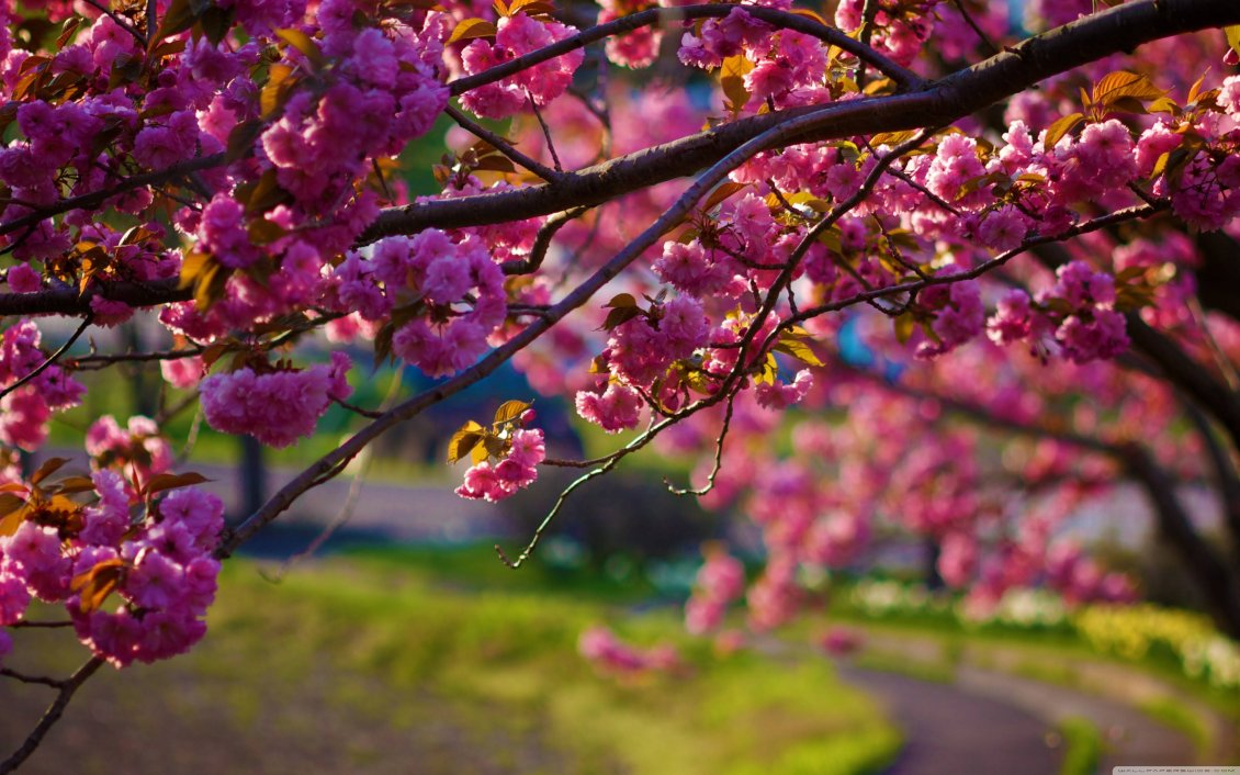 Download Wallpaper Blossom tree - Spring season is here