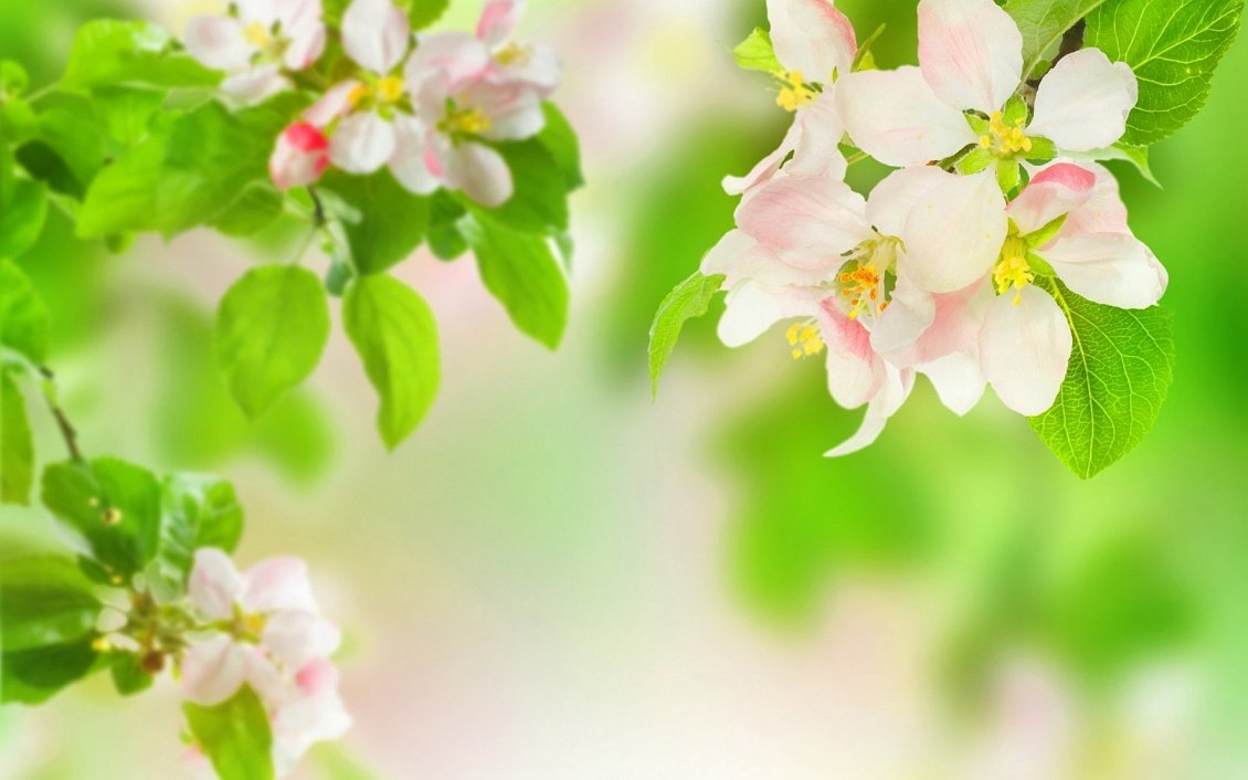 Download Wallpaper Spring perfume on the blossom trees - HD wallpaper
