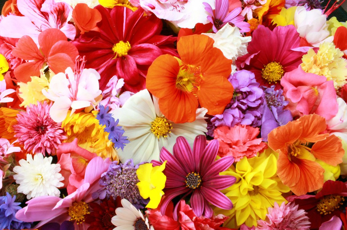 Download Wallpaper Colorful flower carpet - HD Spring wallpaper