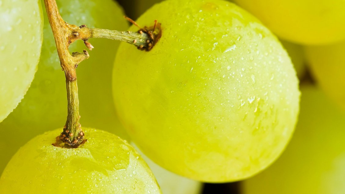 Download Wallpaper Delicious white grapes - Macro fruits wallpaper