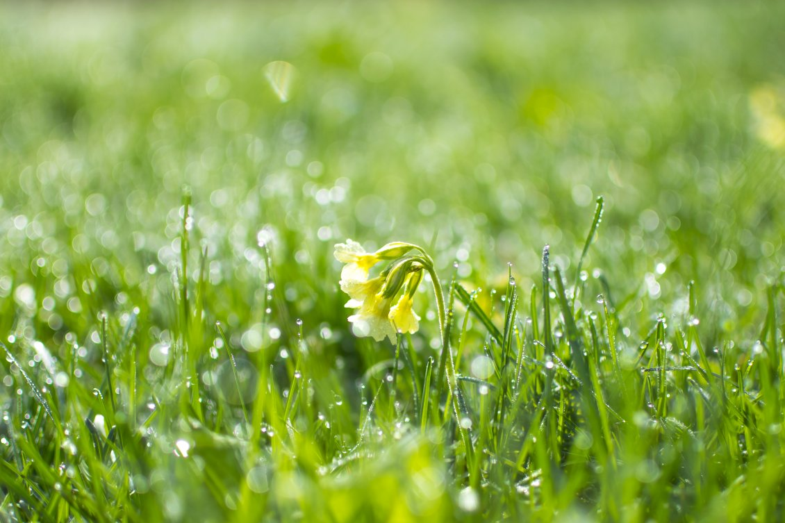 Download Wallpaper Spring flowers in the green garden - Macro water drops