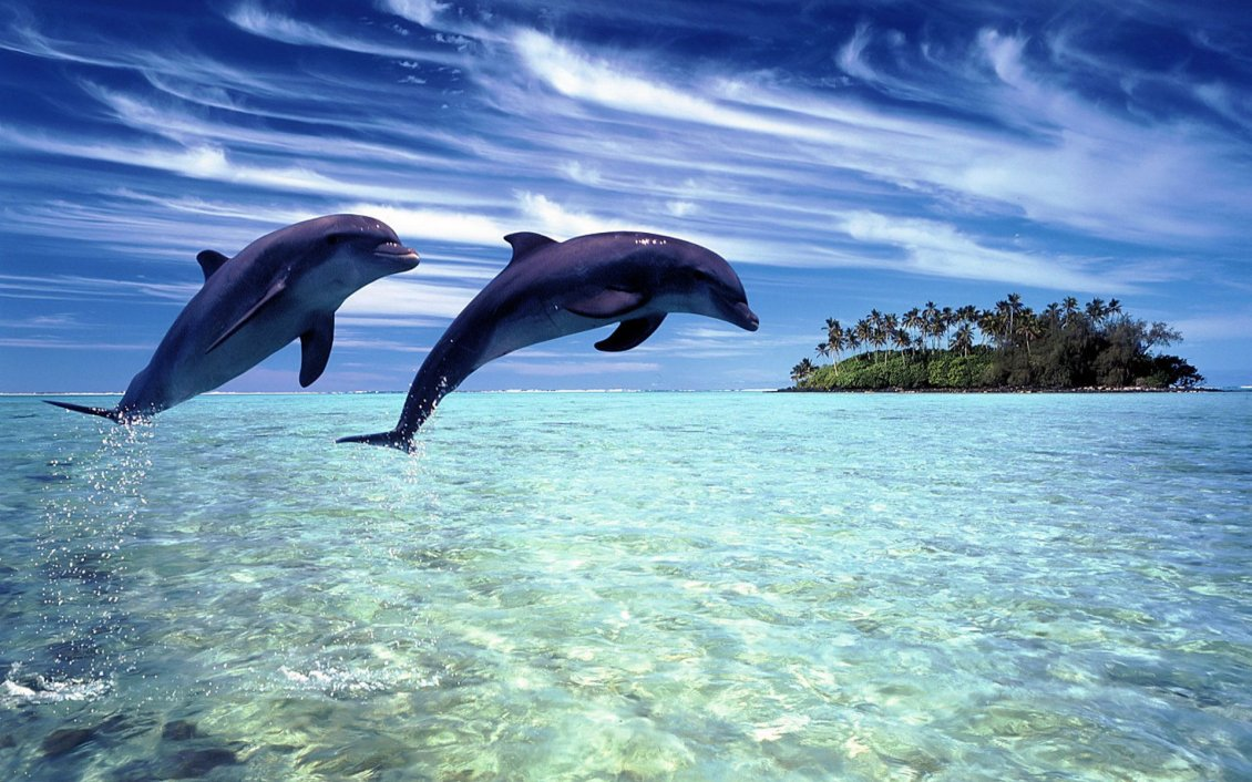 Download Wallpaper Two joyful dolphins playing in the water - HD wallpaper