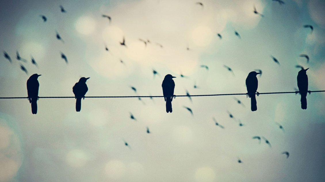 Download Wallpaper Black crows on a phone wire - Funny wallpaper