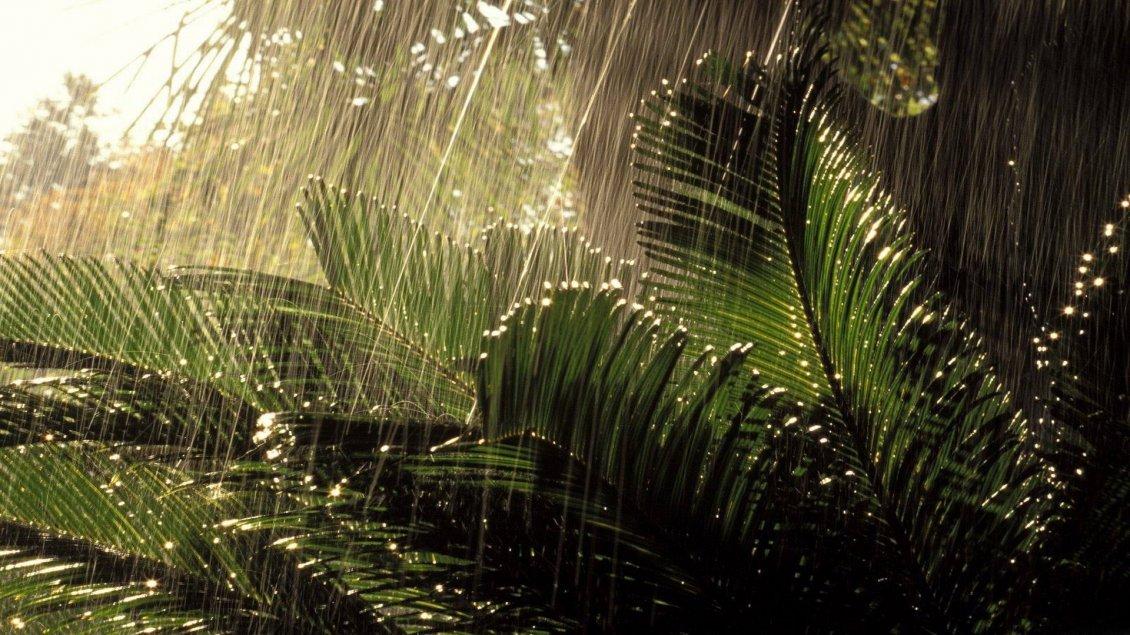 Download Wallpaper Tropical rain in Ecuador - Big water drops over the plants
