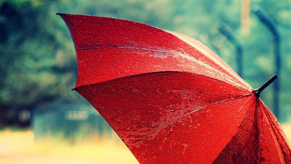 macro red umbrella in the rain hd wallpaper
