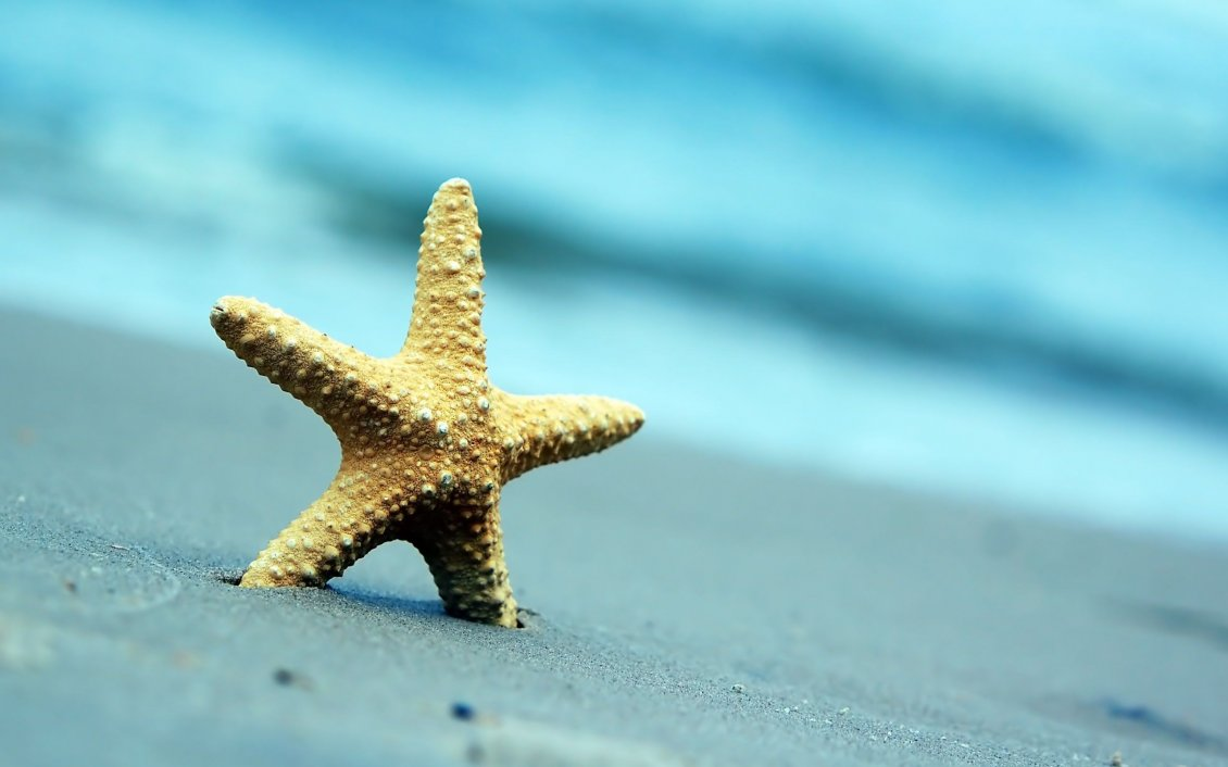 Download Wallpaper Beautiful starfish in the golden sand - Macro summer holiday