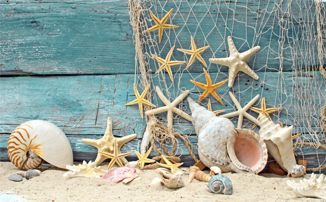 Download Wallpaper Seashells and starfish on the boat - Summer Holiday at sea