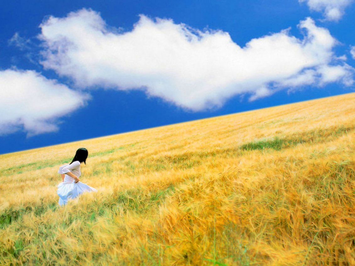 Download Wallpaper Running through the wheat field  - Golden summer time
