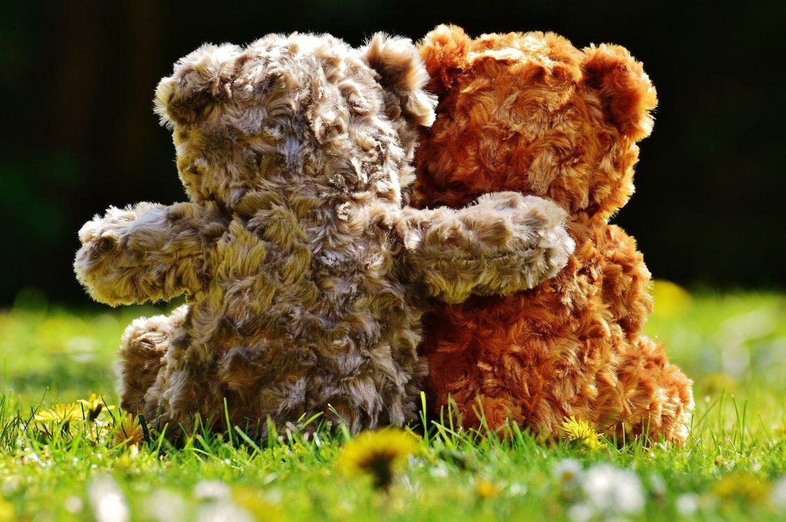 True Love Between Fluffy Bears Romantic Wallpaper