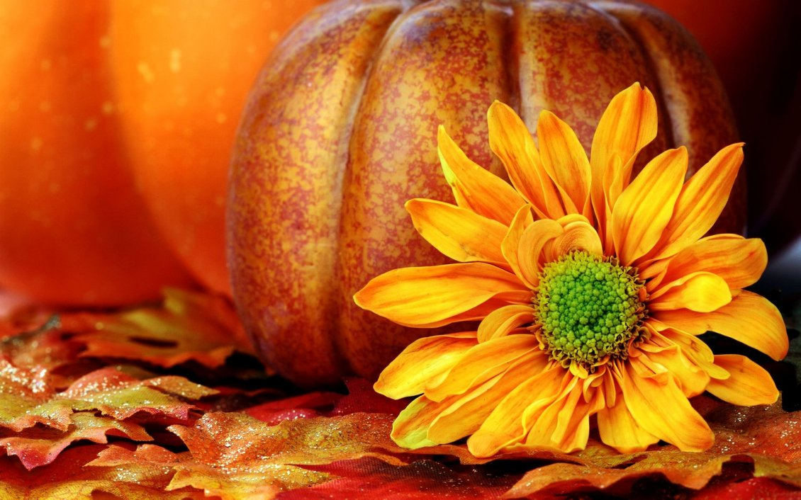 Download Wallpaper Orange Autumn flower and a pumpkin in the background
