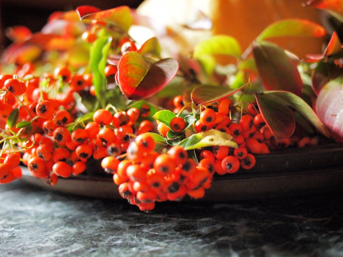 Download Wallpaper Autumn flowers and fruits - Orange wallpaper