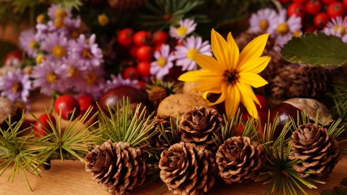 Download Wallpaper Pinecones and Autumn flowers - HD wallpaper