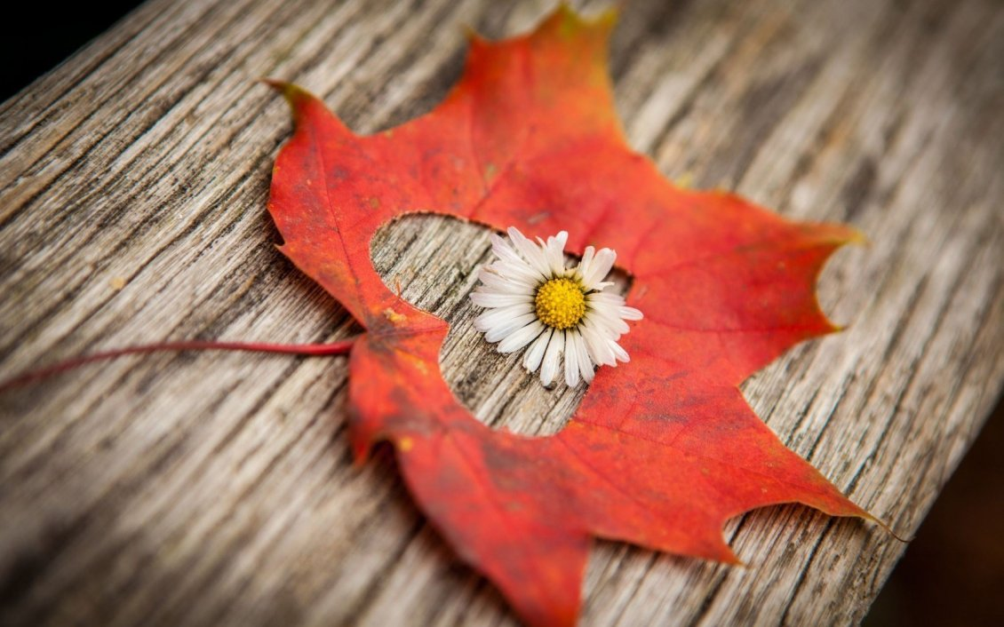 Download Wallpaper Little white flower in the middle of an Autumn leaf - Heart