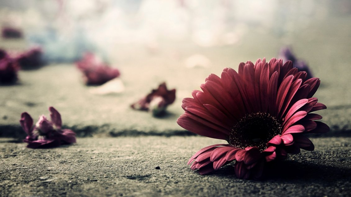 Download Wallpaper Artistic wallpaper - Flowers on the ground