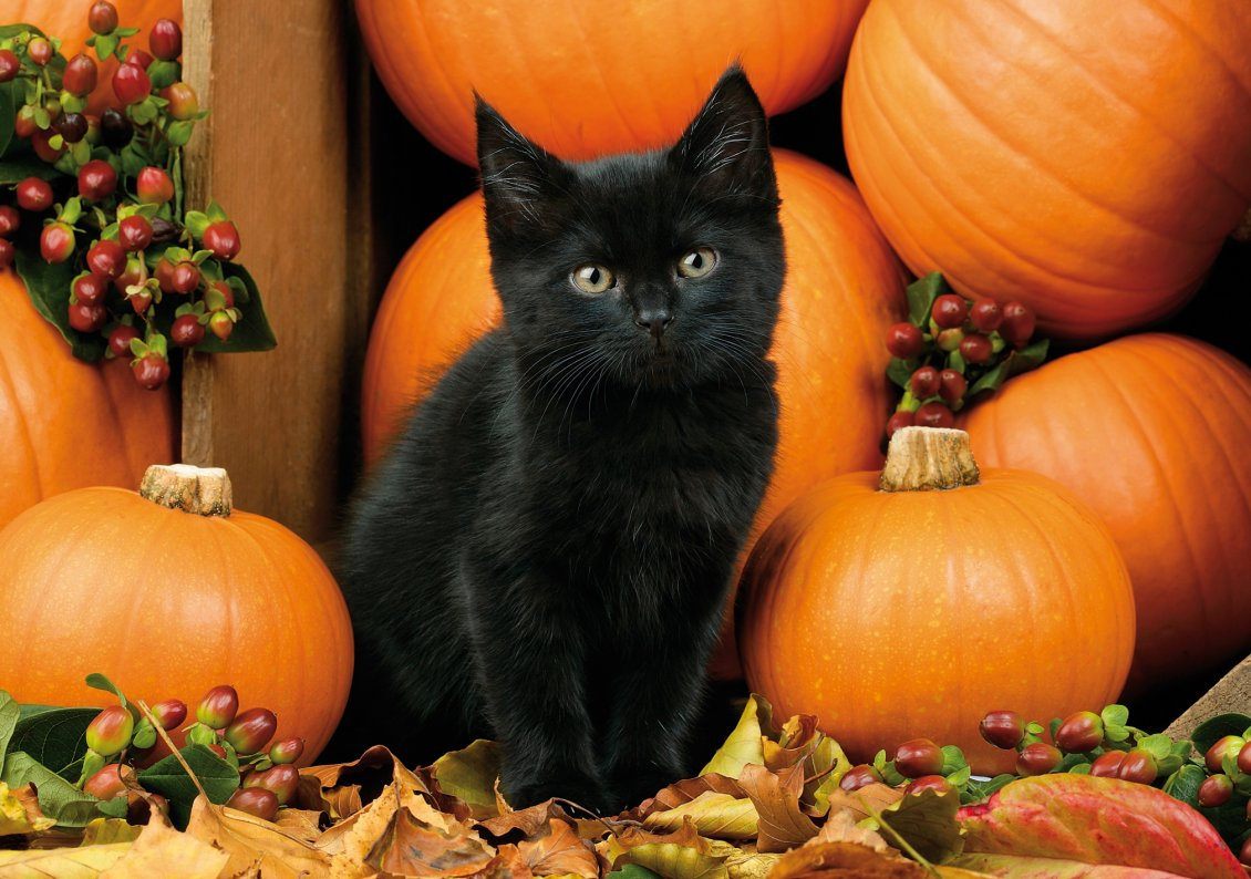 Download Wallpaper Dark cat and orange pumpkins - HD Halloween night