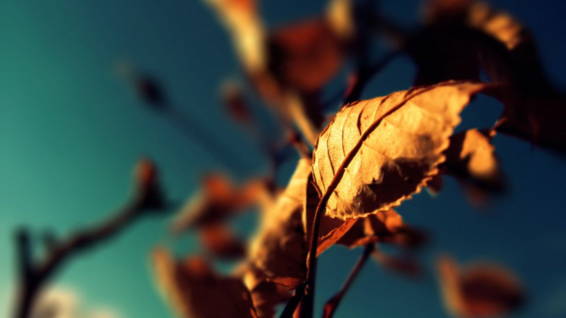 Download Wallpaper Rusty Autumn leaf in the sunlight - Blurry background