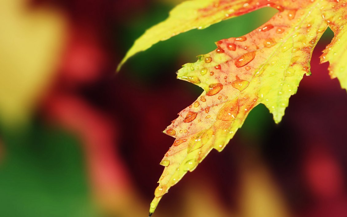 Download Wallpaper Macro water drops on a yellow Autumn leaf - HD wallpaper