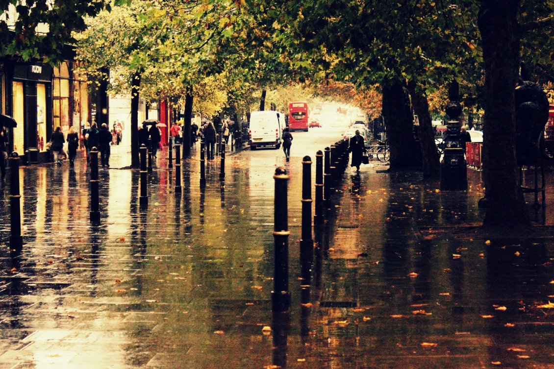 Download Wallpaper Water on the street - Rainy Autumn day in the park