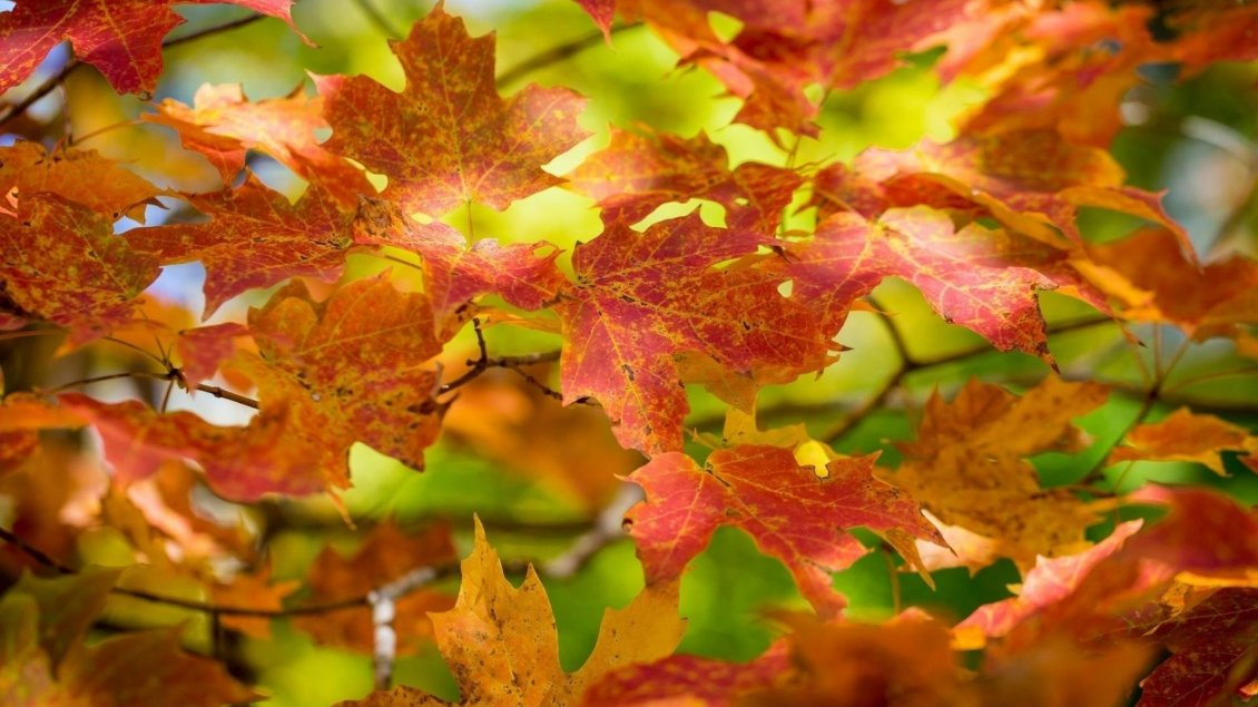 Download Wallpaper Rusty Autumn leaves - Wonderful season nature