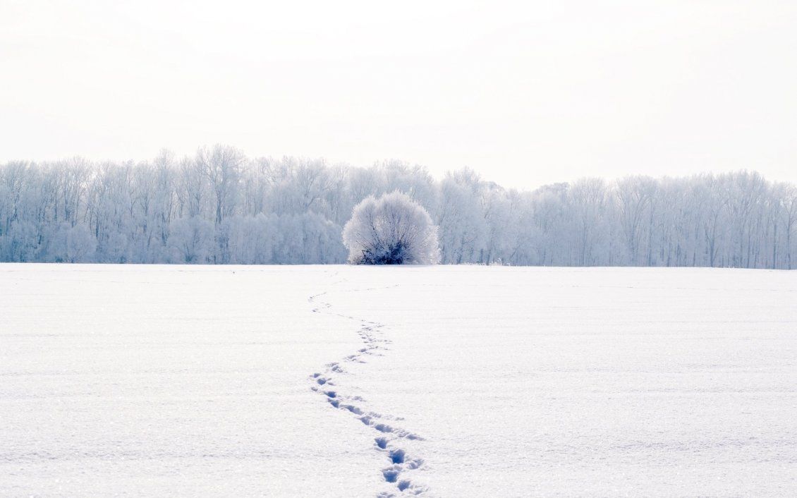 Download Wallpaper Traces in the snow - Wonderful white winter season