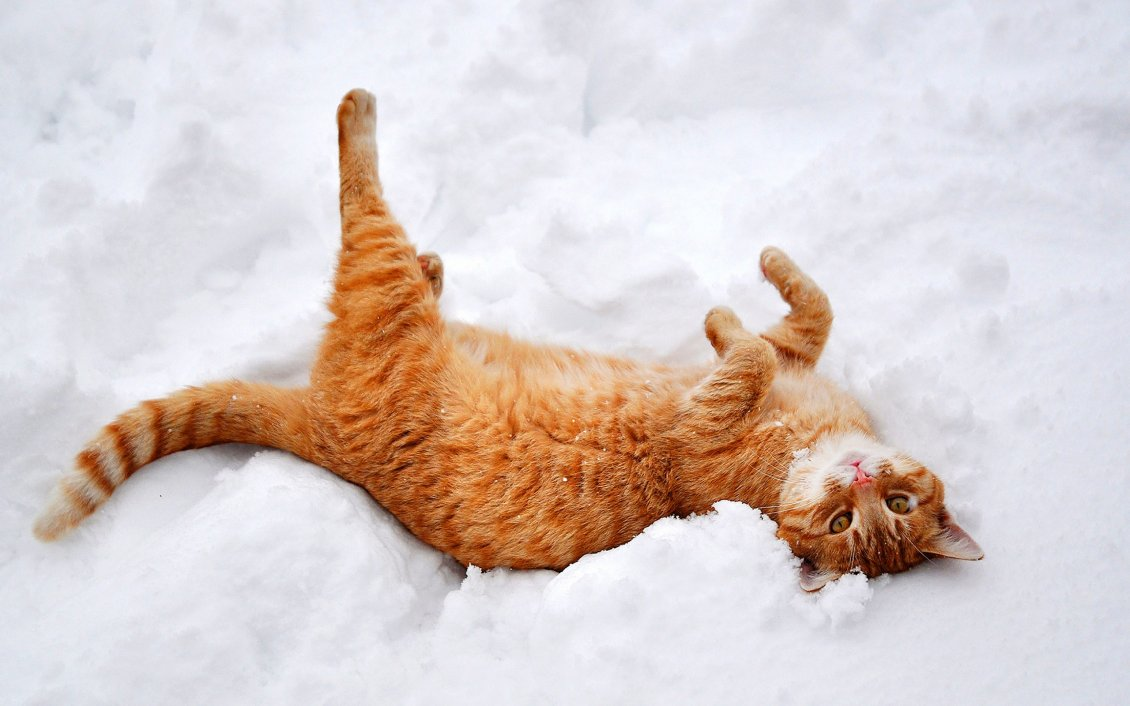 Download Wallpaper Rusty cat play in the white and cold snow - HD wallpaper