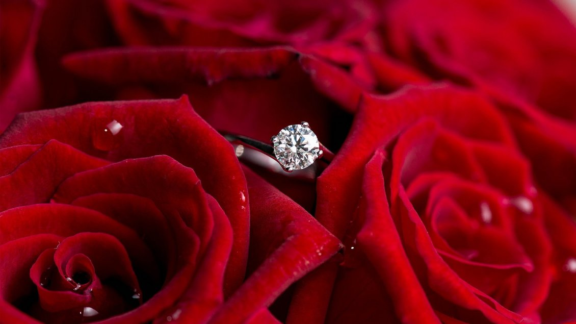 Download Wallpaper Silver ring for marriage and beautiful red roses