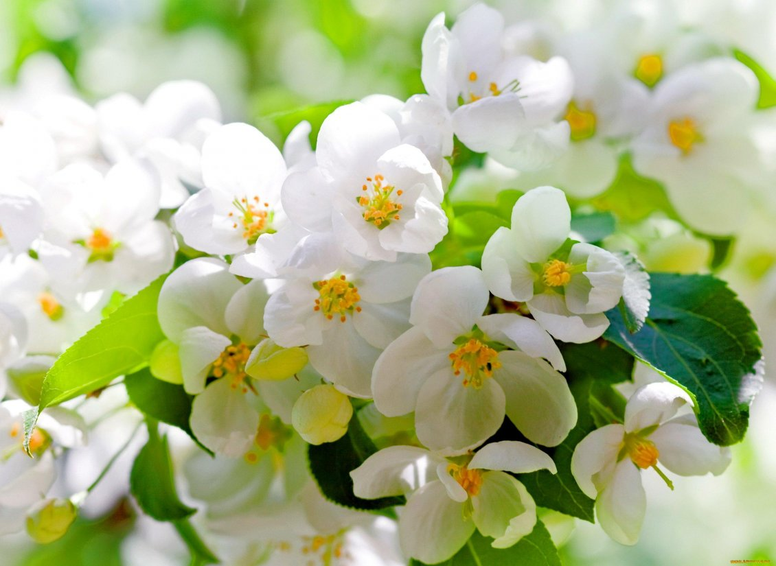 Download Wallpaper Flowers blossom - Wonderful spring season