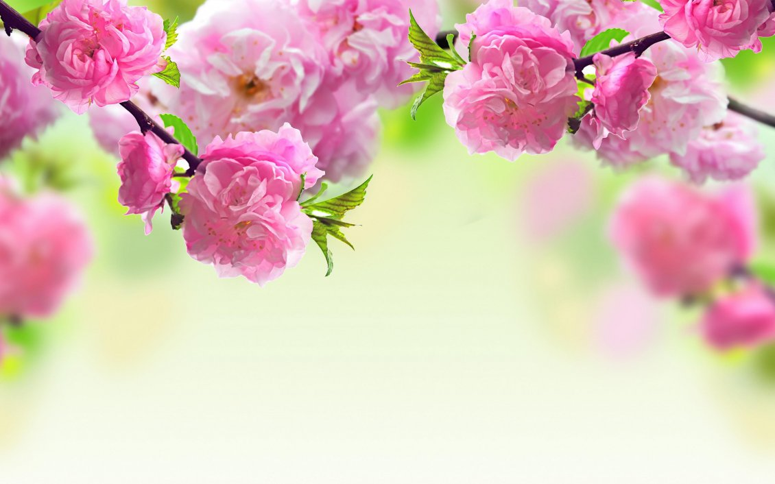 Download Wallpaper Tree blossoming - Beautiful pink spring flowers
