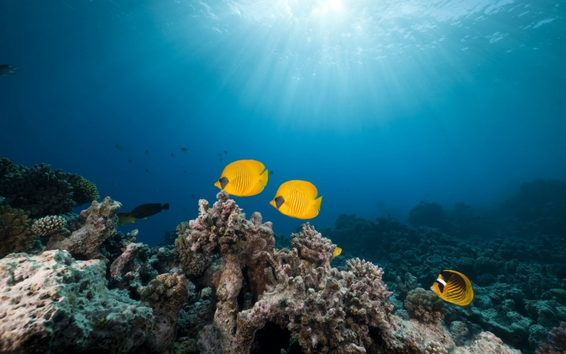 Download Wallpaper Yellow fishes in the ocean - Beautiful world under water