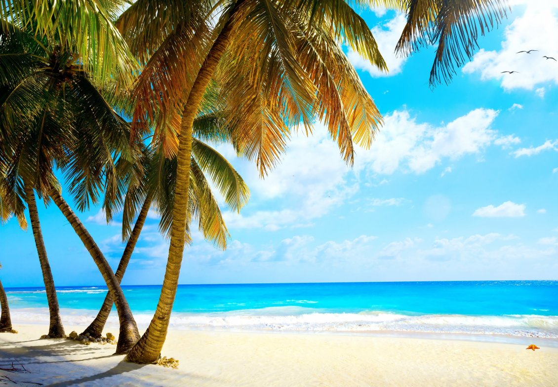 Download Wallpaper White beach sand and big palms - Wonderful azur ocean