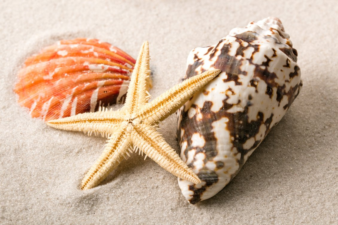 Download Wallpaper Macro shells and starfish in the sand - HD wallpaper