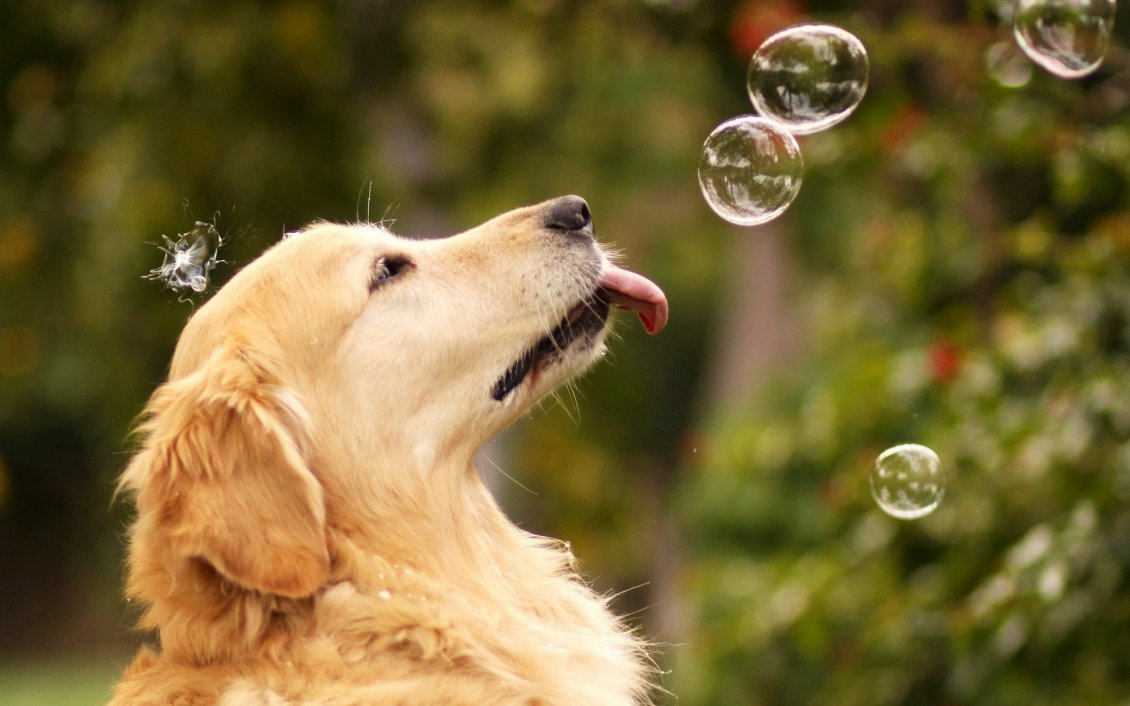 Download Wallpaper Sweet dog play with water soap balloons
