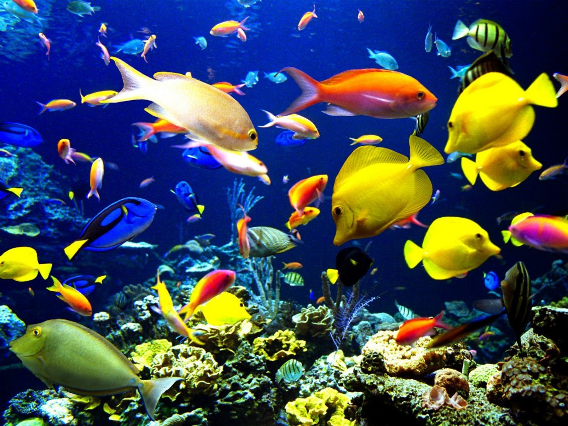 Download Wallpaper Magic colors under water - Happy fishes HD wallpaper