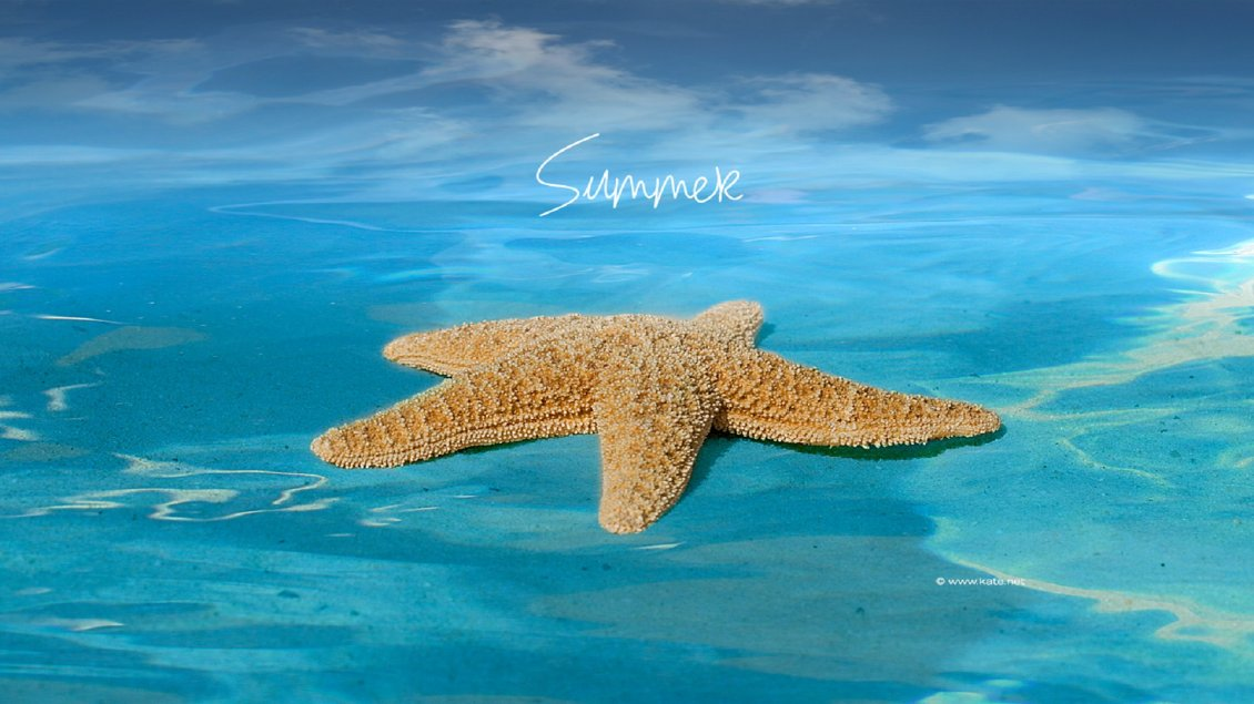 Download Wallpaper Big starfish in the blue ocean water - Summer holiday