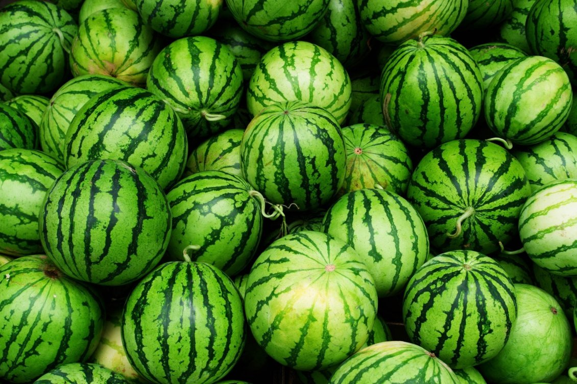 Download Wallpaper Green wallpaper - lots of watermelons - delicious fruit