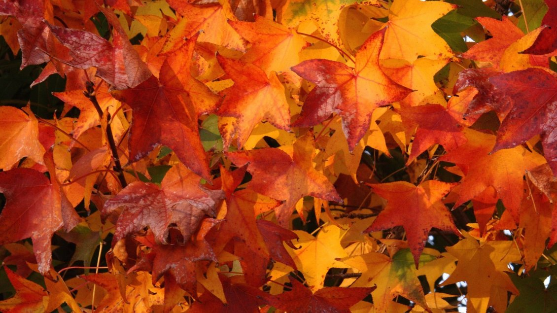 Download Wallpaper Autumn carpet with wonderful rusty leaves