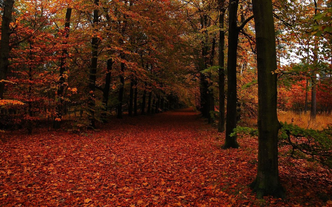 Download Wallpaper Welcome beautiful Autumn season - Rusty carpet of leaves