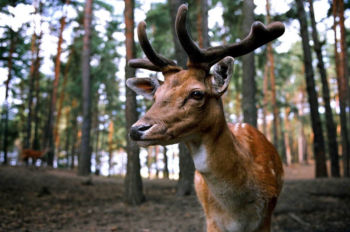 Download Wallpaper Professional photo - Wonderful deer eyes