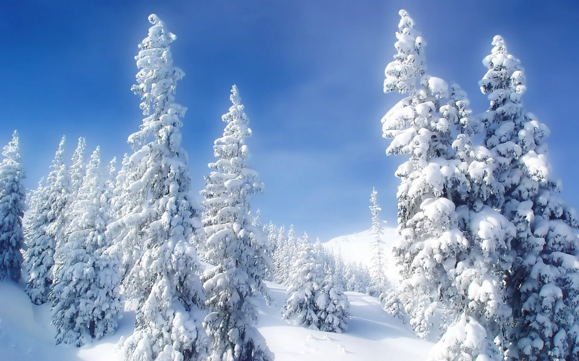 Download Wallpaper Wonderful white snow over the trees - Winter season